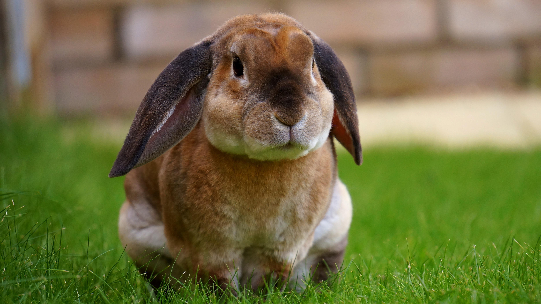 jarig cool konijn