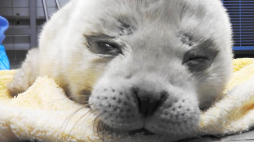 zeehond pieterburen